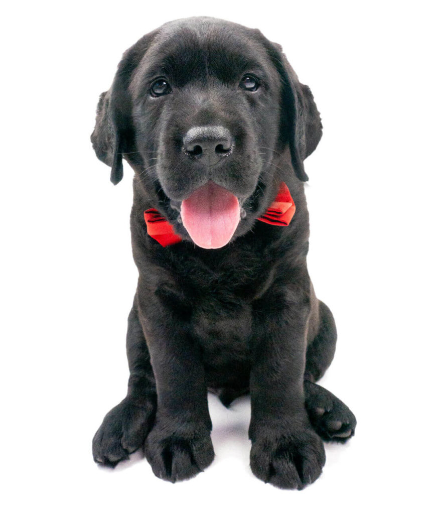 Chico de Hond